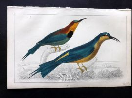 Goldsmith C1850 Hand Col Bird Print. Red-Winged & Blue Headed Bee-Eater